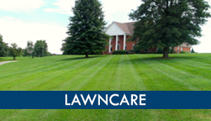 Lawncare major league landscapes lawn grass