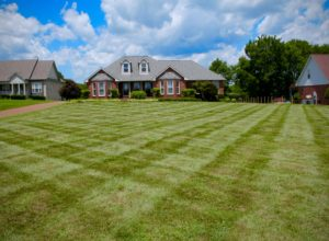 landscaping lawn care grass grounds